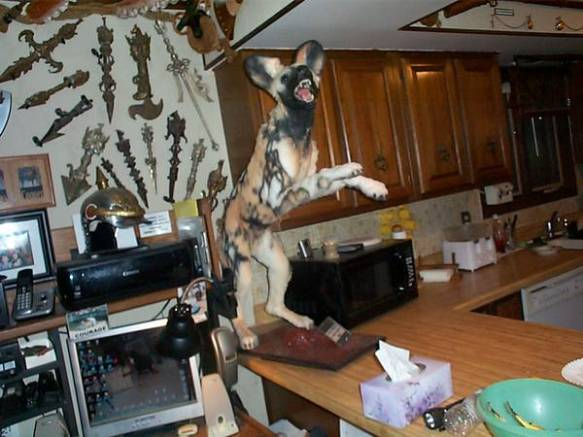 hyena on the kitchen counter