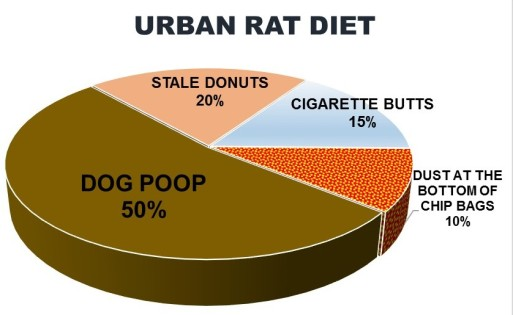 URBAN RAT DIET